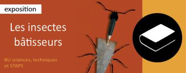 Exposition Les insectes bâtisseurs