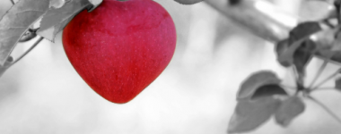 photographie sur fond gris d'une pomme rouge dans un arbre