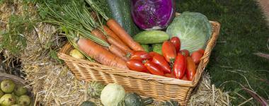 Photograhie d'un panier de légumes de saison ( carottes avec fanes, choux vert et rouge, courgette, tomates allongées...) présentés dans un panier en osier rectangulair, posé sur une botte de paille. D'autres légumes, essentiellement des cucurbitacées sont disposés autour, sur la paille ou le sol.